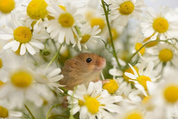 mice13