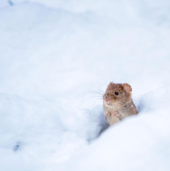 mice05