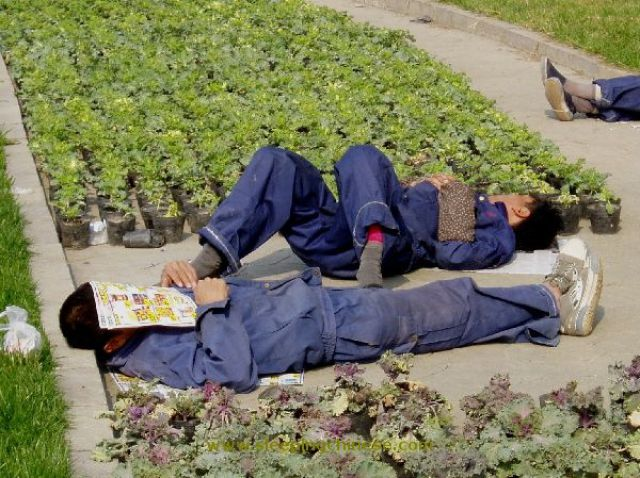 chinese_people_will_sleep_anywhere_640_52