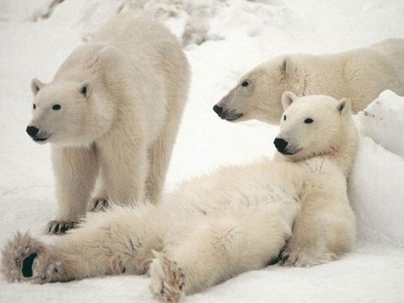 家族団欒のかわいいクマ
