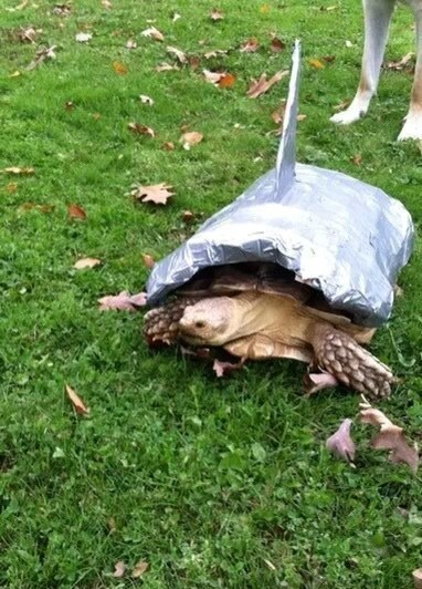 turtle01