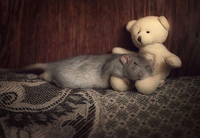 teddy00