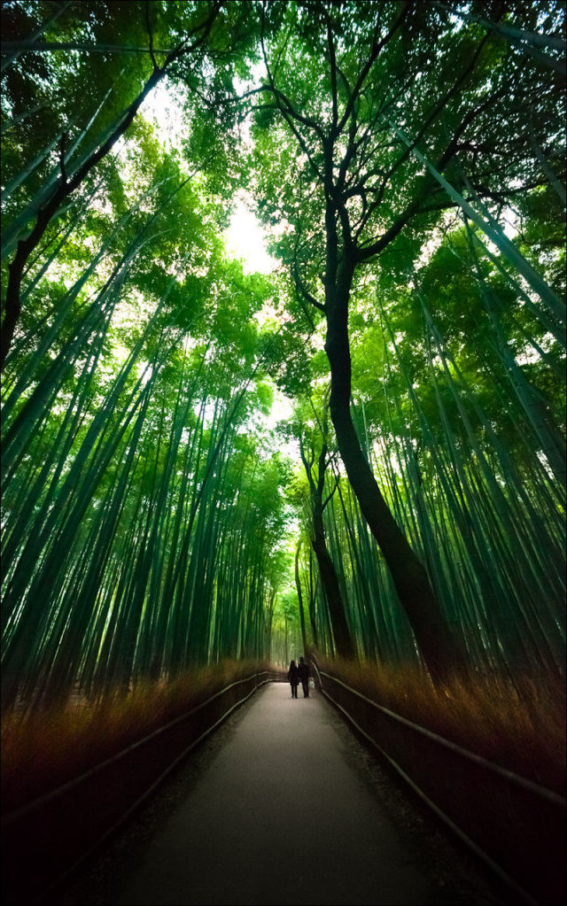 fantastic_bamboo_grove_in_japan_640_high_11