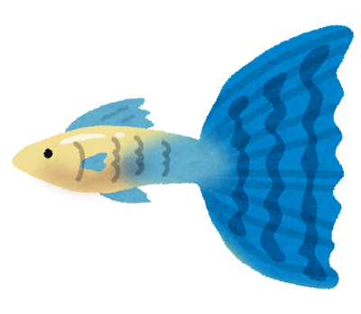 fish_guppy