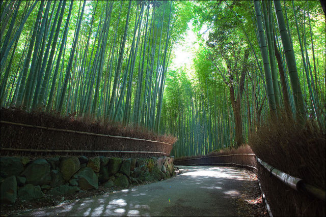 fantastic_bamboo_grove_in_japan_640_04