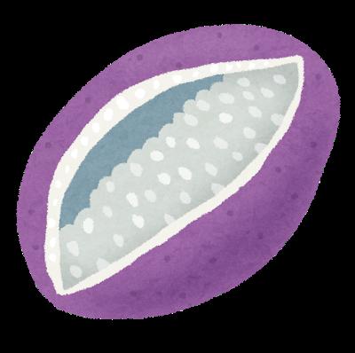 fruit_akebi