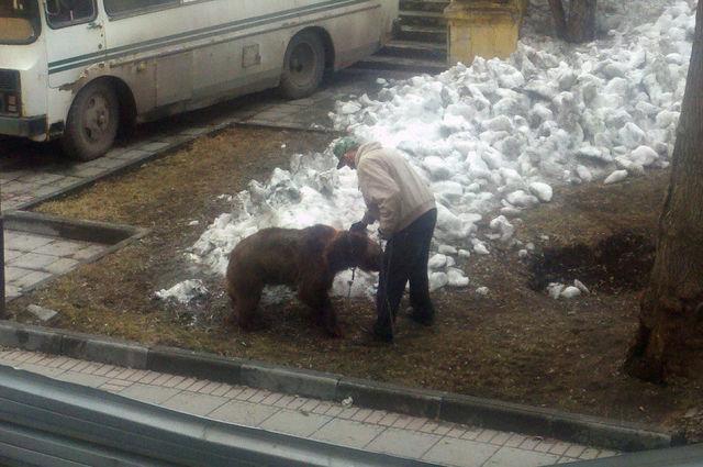 bear34