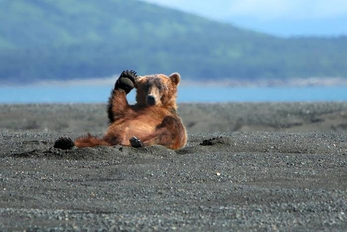 Chill-Like-A-Bear-4