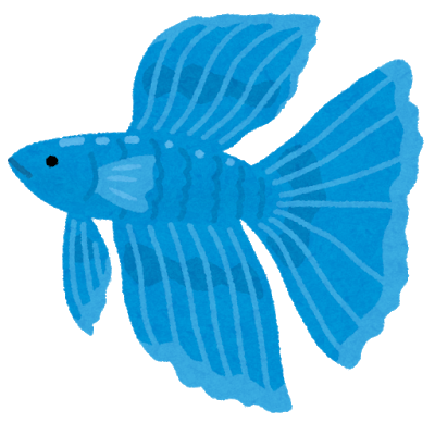fish_beta_betta