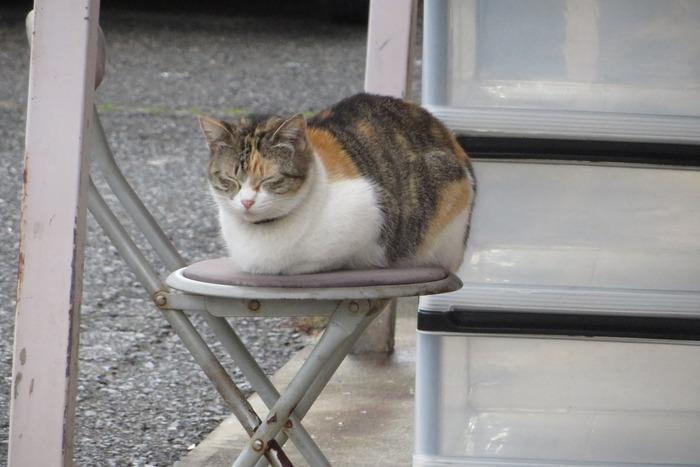撮りためた猫画像の中から座ってる猫画像を貼っていく