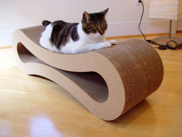 cat021