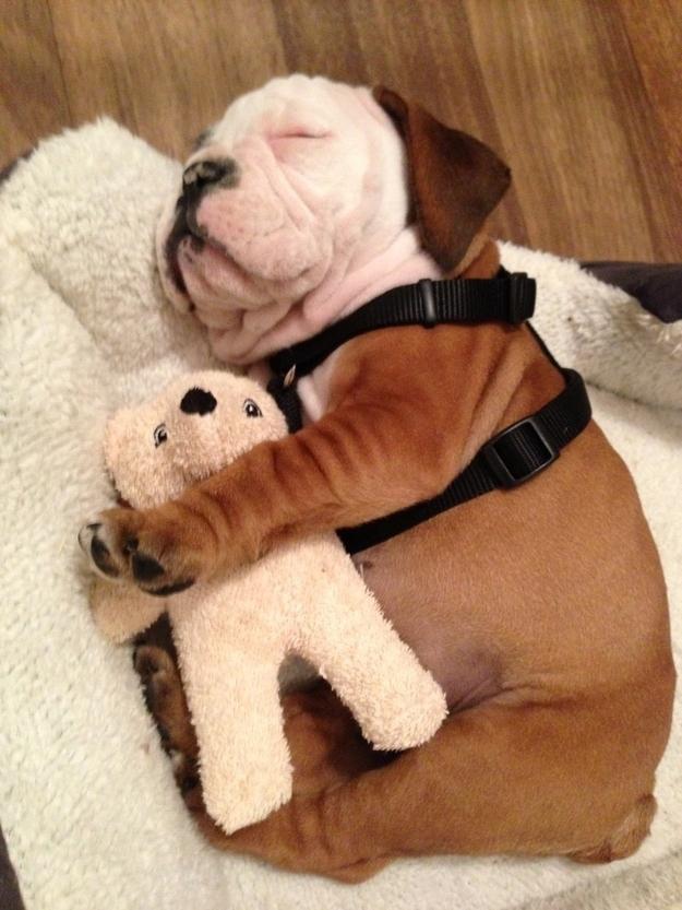 puppy19