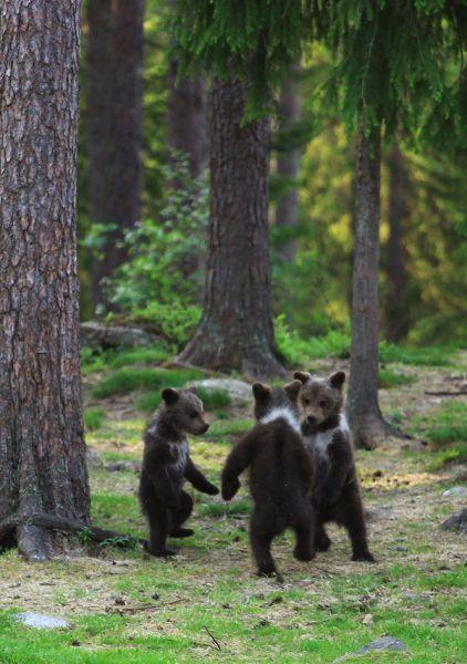 bear00