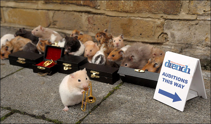 Hamster_Jazz-682_936841a