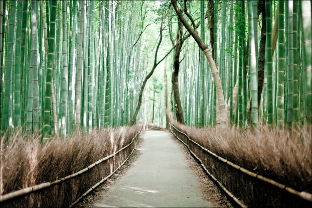 fantastic_bamboo_grove_in_japan_640_08