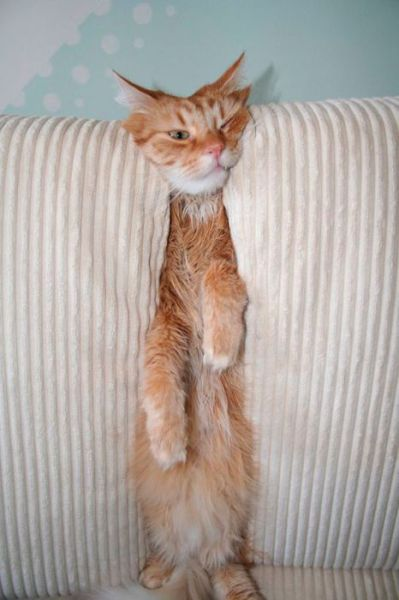 pets_dont_always_get_how_human_furniture_works_640_26