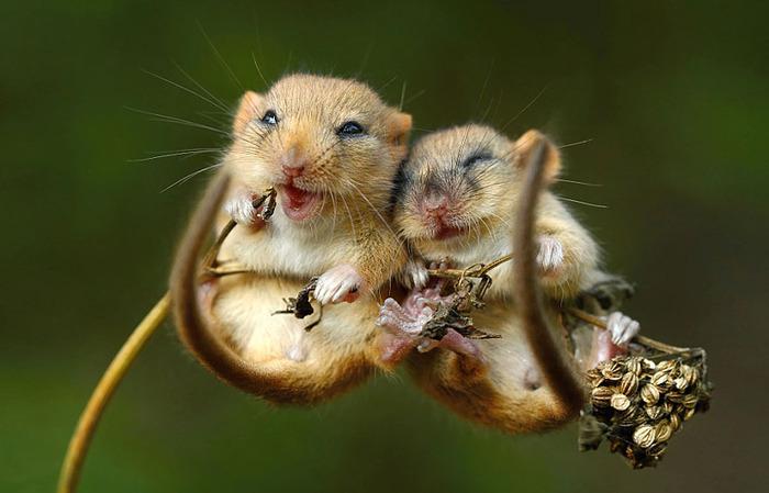 mice04