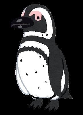 penguin17_magellanic