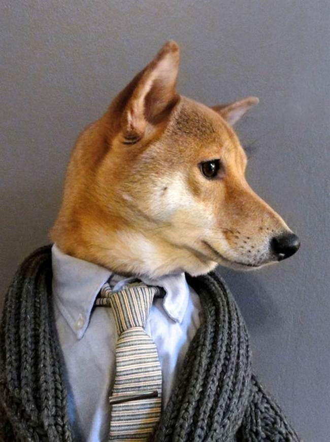 dog18