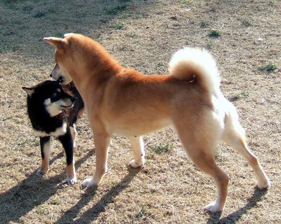 chii&mako