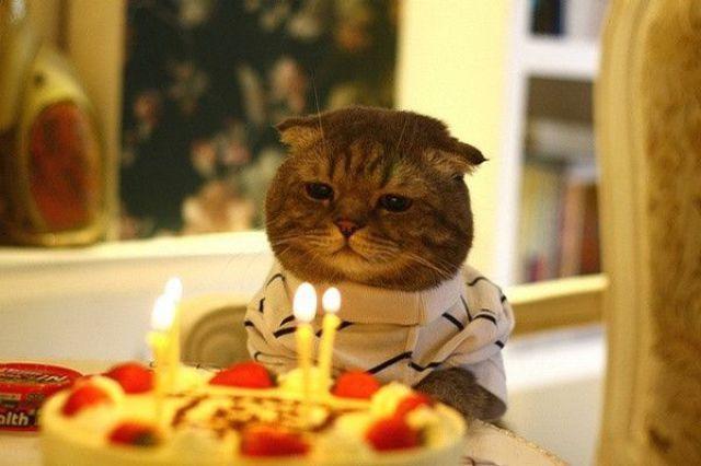 birthcat