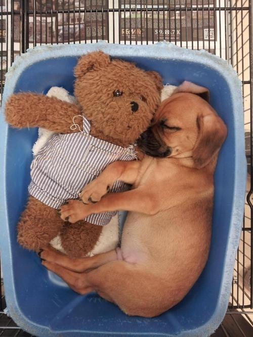 puppy18