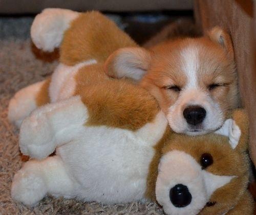 puppy09