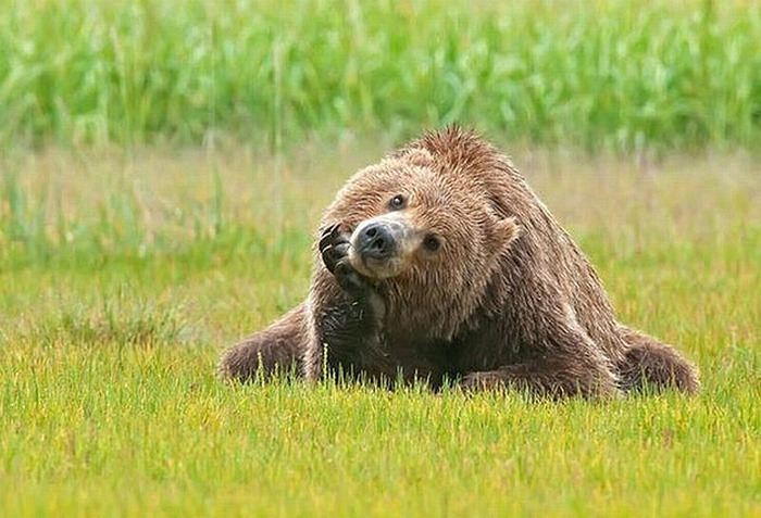 Chill-Like-A-Bear-5