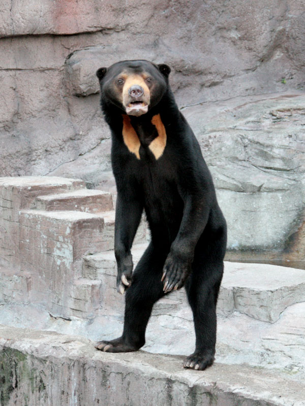 怪しい顔のかわいいクマ