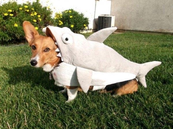 shark002