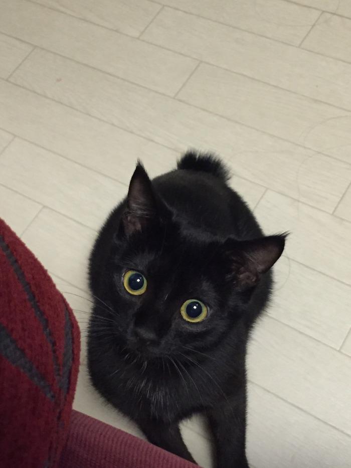 おまえら黒猫好き?見てってよの画像