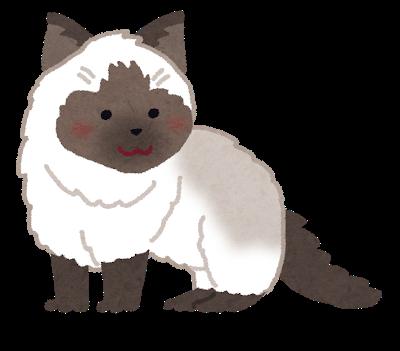 cat_ragdoll