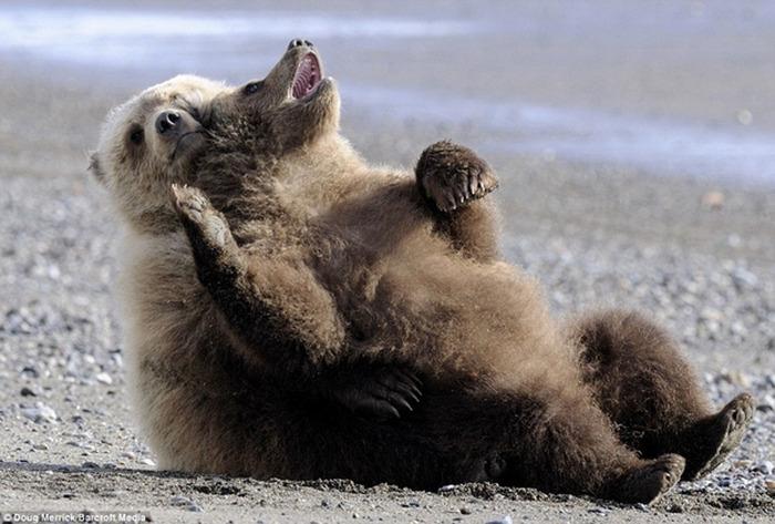 Chill-Like-A-Bear-12