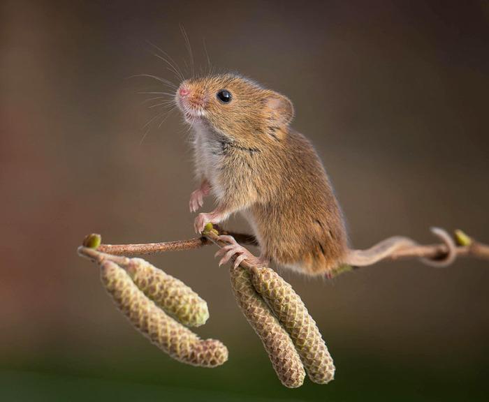 mice00