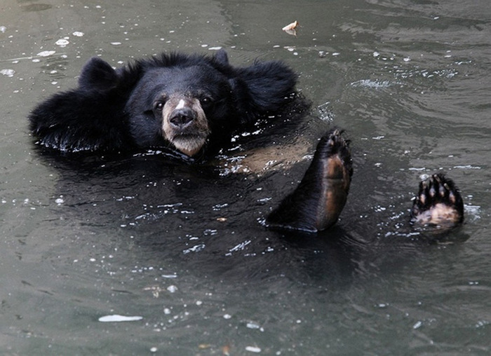 Chill-Like-A-Bear-9