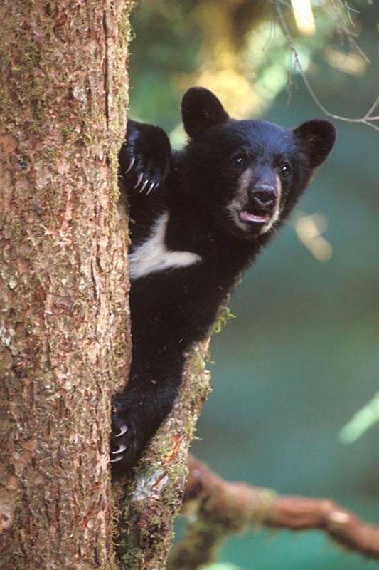 ひょっこり覗くかわいいクマ