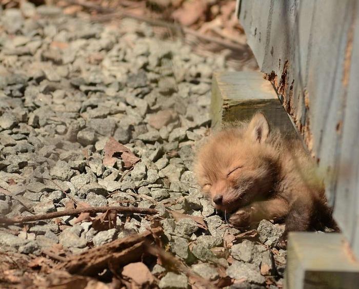 fox00