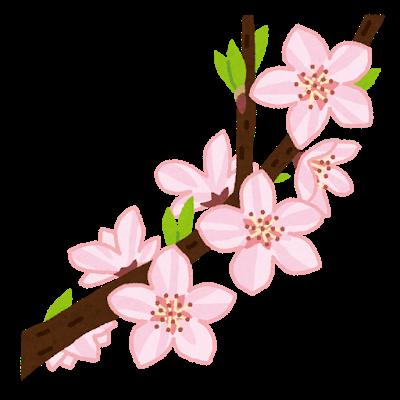 flower_momo