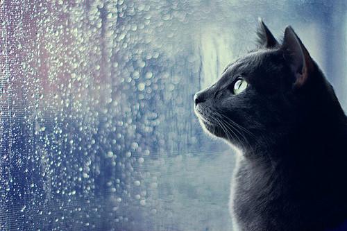 黒猫・至高の美【画像】