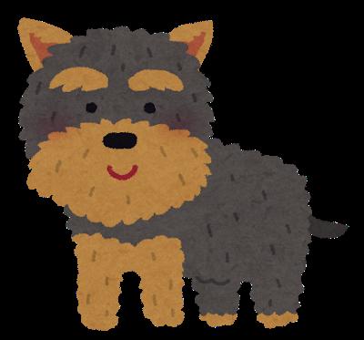 dog_yorkshire_terrier