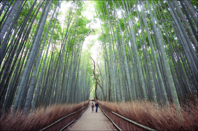 fantastic_bamboo_grove_in_japan_640_07