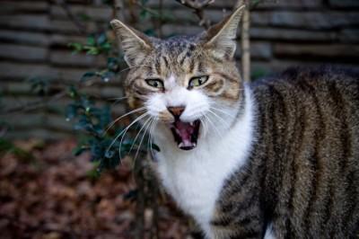 A威嚇する猫-400x266