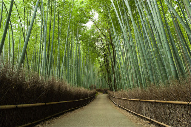 fantastic_bamboo_grove_in_japan_640_05
