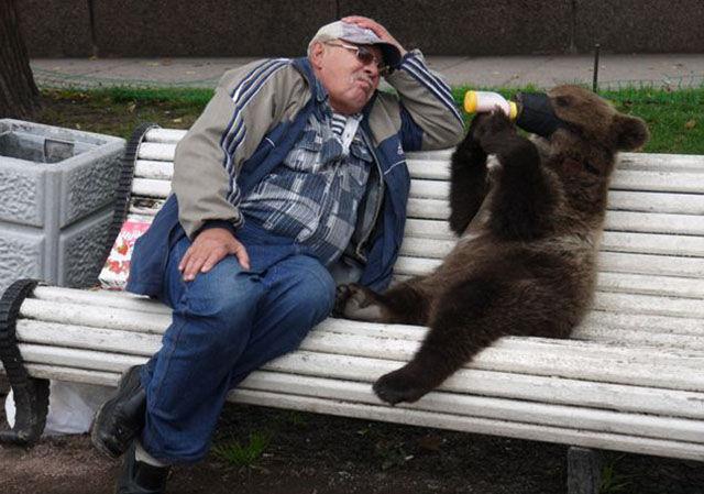 bear14