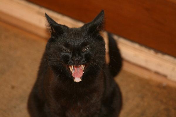 yawn00