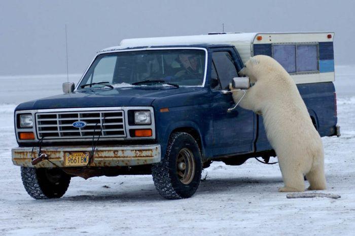 polar02