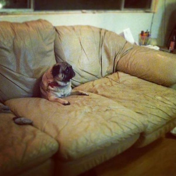 pets_dont_always_get_how_human_furniture_works_640_06