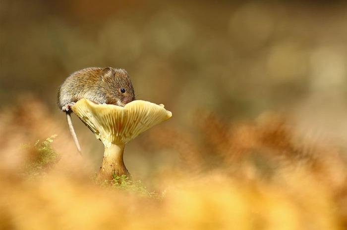 mice25