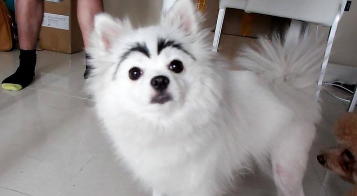 mayudog08