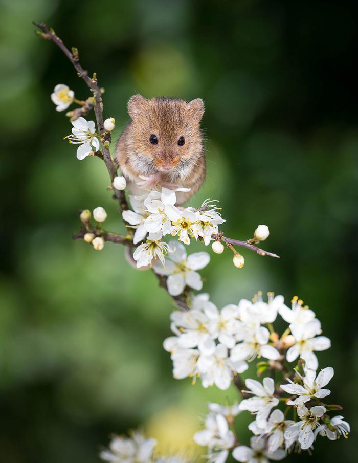 mice17